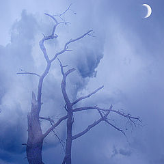 "фото ""Moon Mists...An Avenue for Souls..."""