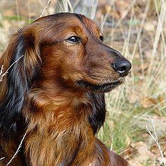 "фото ""Собачий портрет"""