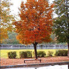 "фото ""Mellow Autumn"""