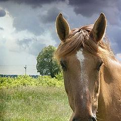 """фото """"Лошадка, сделавшая из пейзажа портрет:)"""""""
