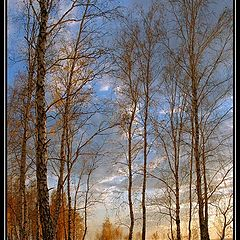 "фото ""Dance of the autumn birches"""
