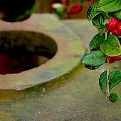 """фото """"... green & red ..."""""""