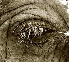 "photo ""Elefant. A fragment"""