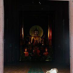 "photo ""Budda guardian"""
