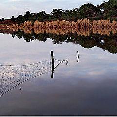 """фото """"Aquatic fence"""""""