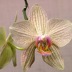"""photo """"orhid"""""""