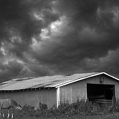 "фото ""Storm Warning"""
