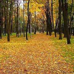 """фото """"Fall Colors 22"""""""