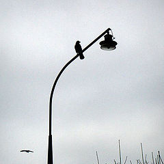 """фото """"Осень. Одиночество."""""""