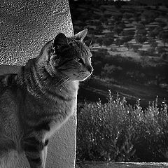 "photo ""bw cat"""