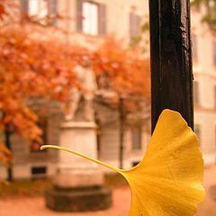 """photo """"autumn time"""""""