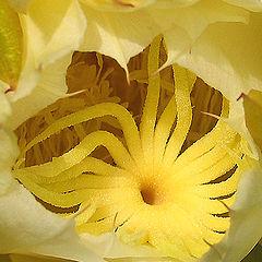 """photo """"cactus flower"""""""