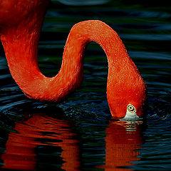 "фото ""RED GRACE"""