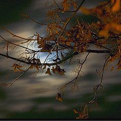 """фото """"... moonshine ..."""""""