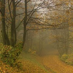 "фото ""Foggy Path"""