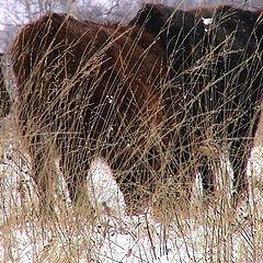 "фото ""The grassland"""
