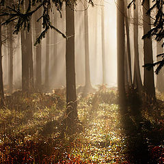 "photo ""Fairy tales of an autumn wood"""