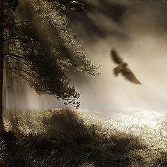 "photo ""Fairy tales of an autumn wood(2)"""