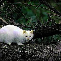 "фото ""white cat!"""