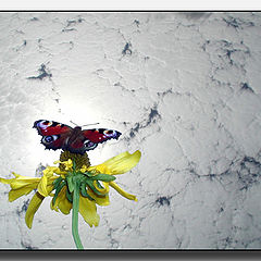 """фото """"Бабочка и творожное небо :)"""""""