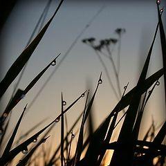 """фотоальбом """"Nature"""""""