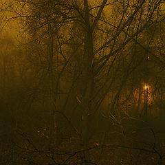 "photo ""Fog"""