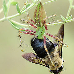 "photo ""Atkins Diet for Insects"""