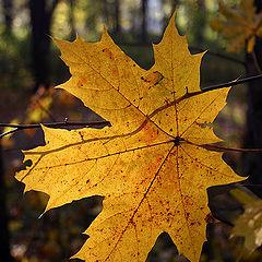 """photo """"Autumnal sun"""""""
