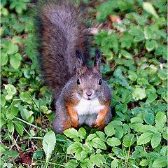 "фото ""Got some nuts, man?"""