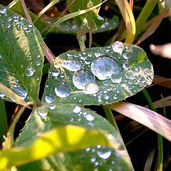 "photo ""Autumn dew"""