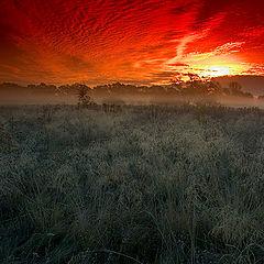 """фото """"sunrise 1"""""""
