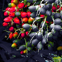 """фото """"When they are ripe"""""""