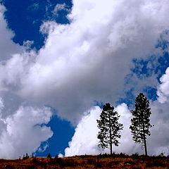 "фото ""2 trees"""