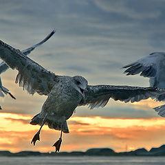 """photo """"Three gull"""""""