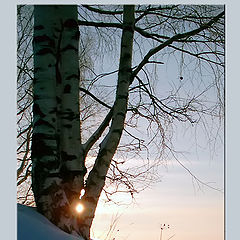"photo ""Three birches"""