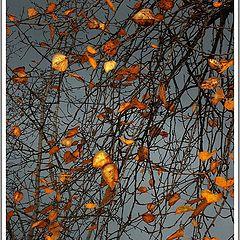 """фото """"*Осень*"""""""