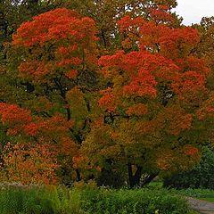 "фото ""Autumn Sketch. #41"""