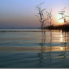 """photo """"New day (for Nadyusha Kvitka)"""""""