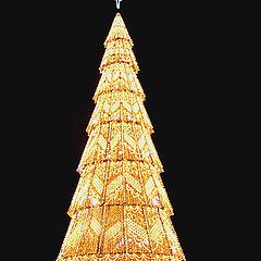 """photo """"""""Christmas Tree"""""""""""