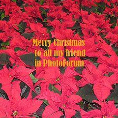 "photo ""MERRY CHRISTMAS"""
