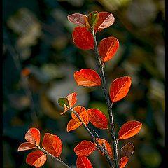 "фото ""autumn twig..."""