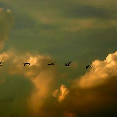 """фотоальбом """"Птичий заповедник Шмурат Ахула, Израиль"""""""