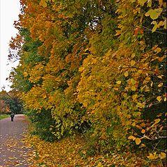 "фото ""Autumn Sketch. #11"""