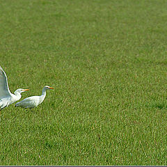 """фото """"Freedom in the green"""""""