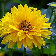 """photo """"yellow flower"""""""