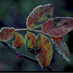 "фото ""frost ..."""