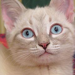 """album """"cat Bozi aka Krendel`"""""""