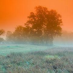 "фото ""fog 1"""