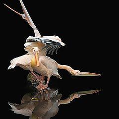 """фото """"Этюд.  Пеликаны и желтый лист."""""""