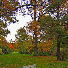 """фото """"Bench. Park. Autumn."""""""